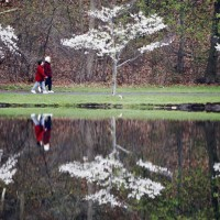 Pedestrians walk among blooming trees reflected in a pond